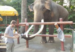 Elliott Killian feeding an elephant at the Chiang Mai Zoo.